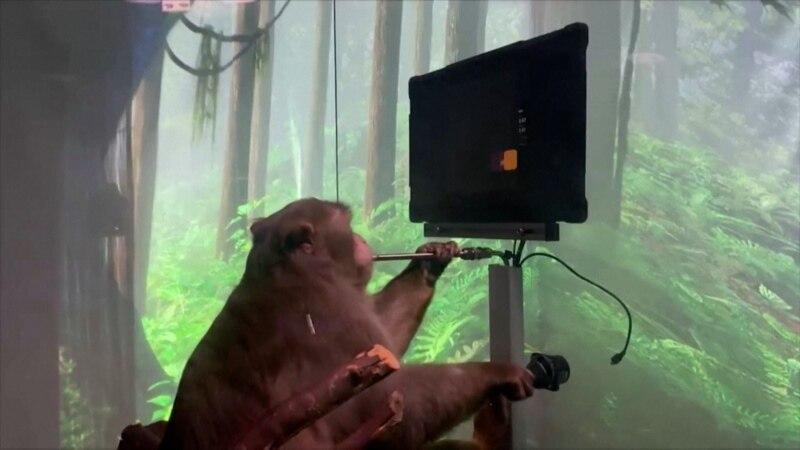 'Neuralink' ฝังชิปในสมอง 'ลิง' เพียงแค่คิด ก็เล่นเกมได้