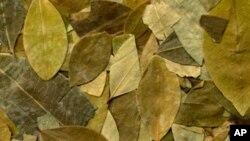 Lišće biljke koke