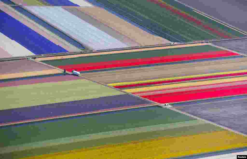 An aerial view of flower fields is seen near the Keukenhof park, also known as the Garden of Europe, in Lisse, The Netherlands.