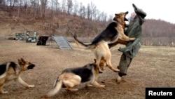Кучиња во сопственост на севернокорејската армија вежбаат напад на кукла на која е залепен портретот на јужнокорејскиот министер за одбрана Ким Кван-џин