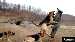Chó nghiệp vụ của quân đội Bắc Triều Tiên tập tấn công hình nộm của Bộ trưởng Quốc phòng Nam Triều Tiên Kim Kwan-jin.