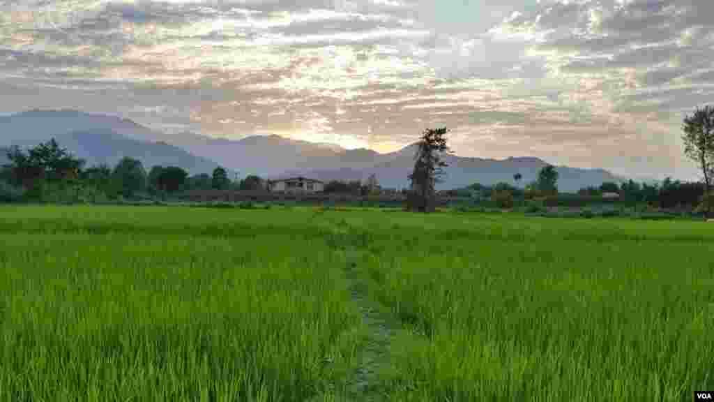 چوبر تالش در استان گیلان عکس: کیومرث (ارسالی از شما)