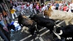 Para peserta Festival San Fermin berusaha menghindar dari banteng-banteng. Pamplona, Spanyol Utara.