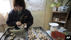 Niiwa Anzai, 30, packs shiitake mushrooms at the Anzai family farm near Fukushima, northern Japan, April 6, 2011