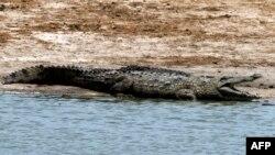 Un crocodile africain au parc national de Hwange, Zimbabwe, 17 novembre 2012.