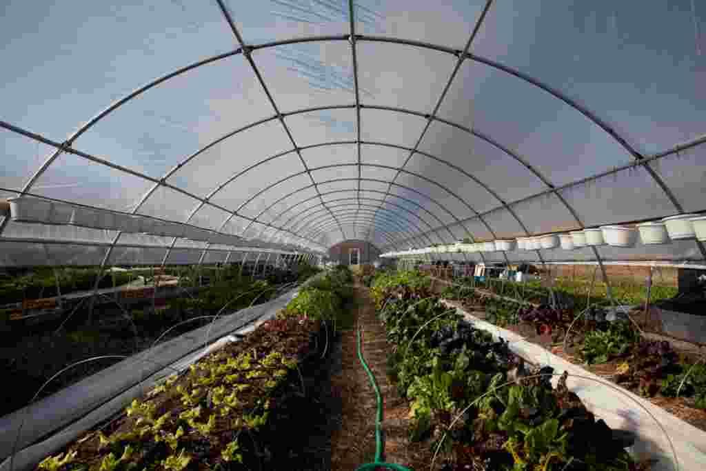 Salas protegidas por plástico son cubiertas durante la noche para balancear la temperatura.
