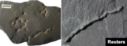 Tubular structures found in black shale from a quarry in Gabon dating from 2.1 billion years ago - providing evidence of the earliest-known mobile organisms on Earth - are shown in Poitiers, France in this undated handout photo obtained Feb. 11, 2019.