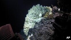 La esponja gigante, entre blanca y azul, asemeja el tejido cerebral.