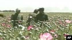 Progress Against Poppy Production