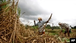 Indian sugar cane farmers performed worse on cognitive tests when they were poorer, right before the harvest, than when they were richer, after the harvest.