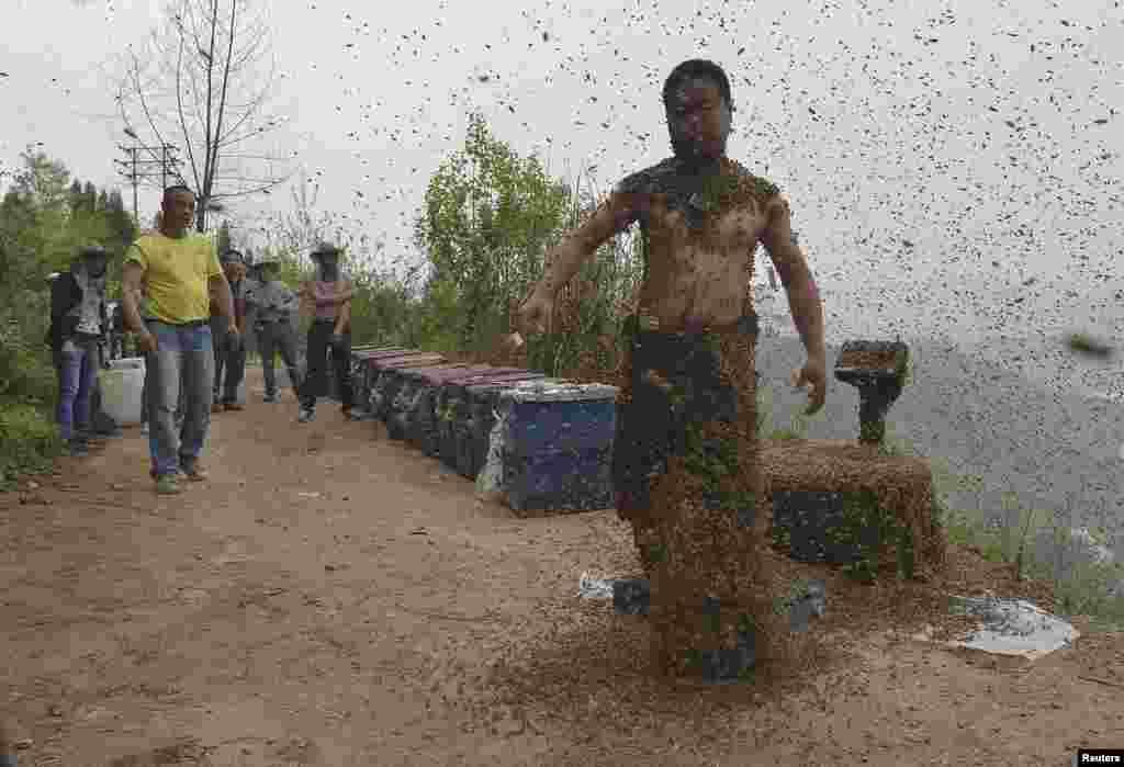 چین میں شی پنگ نامی شخص نے چار لاکھ 56 ہزار پانچ سو شہد کی مکھیوں کو اپنے جسم پر جمع کر نے کا مظاہرہ کیا۔