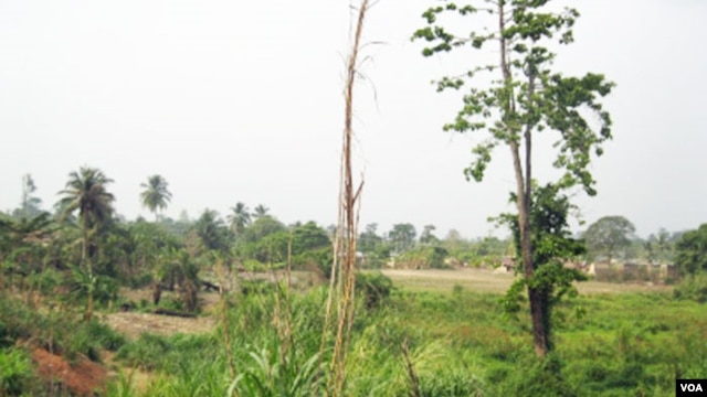 Degraded forest landscape in the Offinso District, Ghana. The original high forest cover has been modified through over-exploitation of wood, agriculture and  human settlements. (Photo by Ernest Foli, FORNESSA)