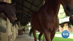 Ugandans Embrace Equestrian Sports