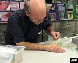 Entomolog Lu Sorkin