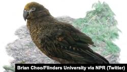 طوطی عظیم الجثه ماقبل تاریخ - نقاشی از براین چو، دانشگاه فلیندرز