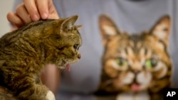 Lil Bub di CatCon, Los Angeles