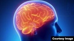 پروتین های مضر در هنگام خواب از دماغ طرح می شود.