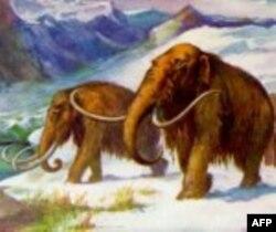 Dugodlaki mamuti, koji su izumrli pre 5 hiljada godina, nastanjivali su velike oblasti na severu Azije