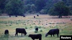 Một trang trại tại bang Missouri.