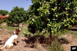 Dog looking at a tree.