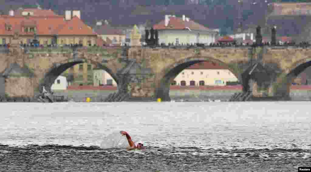 Seorang perenang musim dingin mengikuti lomba di Sungai Vltava, Praha, Republik Ceko.