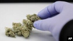 El estado de Michigan en EE.UU. ha legalizado la marihuana para uso recreacional, mientras Utah demanda.