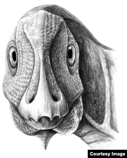 A reconstruction of the young Telmatosaurus individual. (Mihai Dumbravă)