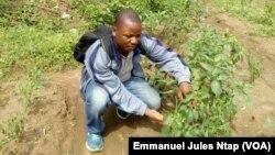 L'ex migrant Alain Christian Mboena dans le champs de poivre qu'il a créé au village Biyaga, le 3 décembre 2017. (VOA/Emmanuel Jules Ntap)