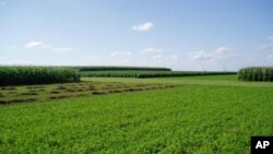 Fossil energy use was compared among different crop rotation systems in a field experiment conducted between 2003 and 2008 in Boone Co., Iowa