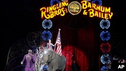 An Asian elephant performs during the national anthem for the final time in the Ringling Brothers and Barnum & Bailey Circus, May 1, 2016, in Providence, Rhode Island. The circus closes its own chapter on a controversial practice that has entertained audi