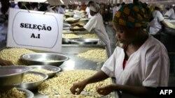Processamento de castanha, um dos principais produtos de exportação, Nampula, Moçambique.