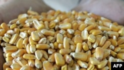 ООН призывает удвоить производство продуктов питания