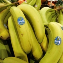 Bananas too green to eat? Put them in a bag with an apple for quicker ripening.