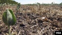 Chile sufre la peor sequía en 50 años. El presidente ordenó la formación de un equipo que estudie fórmulas para paliar los efectos de La Niña.