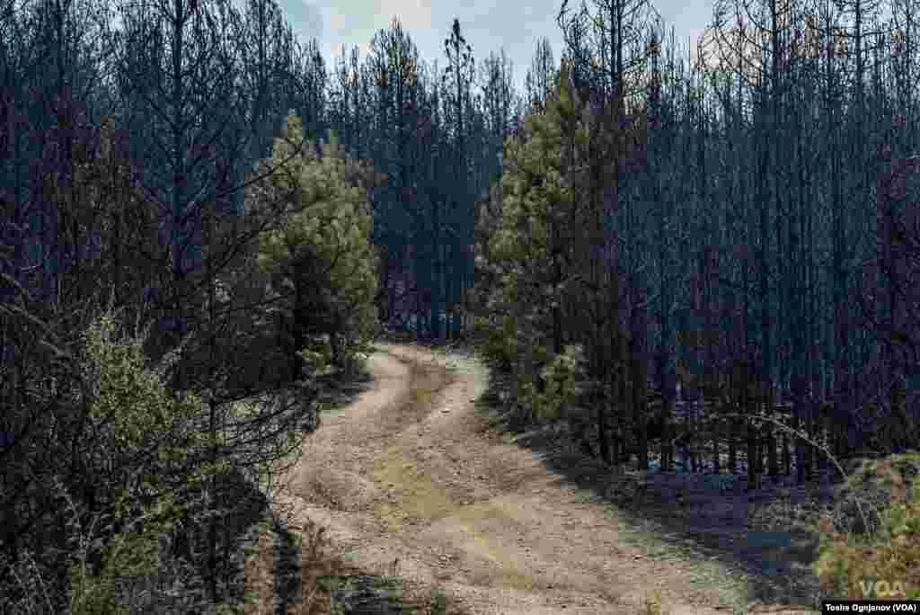 Пожари Малешевија / Wildfires in North Macedonia