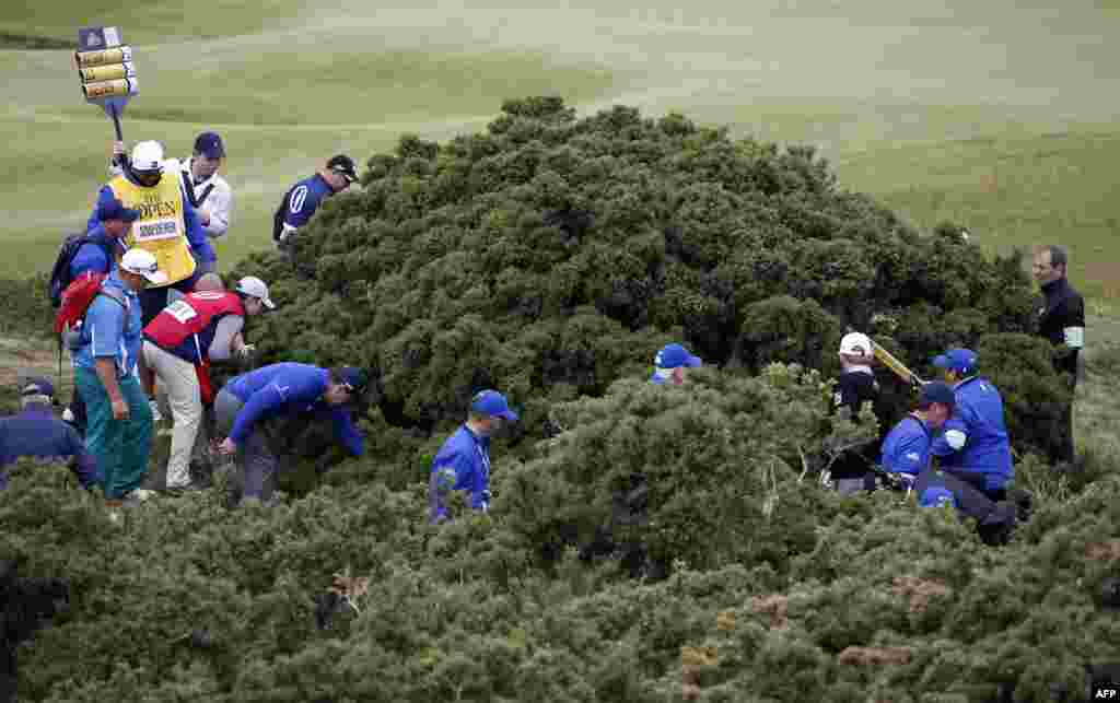 Players, officials and caddies look for Ernie Els's ball in the gorse bushes during the first round of the 2015 British Open Golf Championship on The Old Course at St Andrews in Scotland.