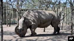 Kenya Rhino Dating App