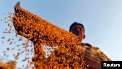 FILE - Farmer sifts wheat crop at a farm on the outskirts of western Indian city of Ahmedabad.