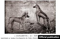 Hình ảnh hai con chó Phú Quốc tên là Annamite và Kratie ở Thảo cầm viên Paris trong sách của Bá tước De Bylant (ảnh trích từ đặc san Le Chenil)