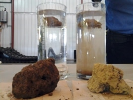 Water filtered through the no-till soil (left) was clearer and had less sediment, than the water that ran off the tilled soil (right).