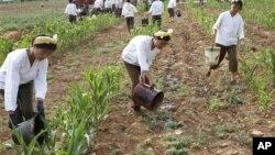 지난달 22일 북한 황해남도 고현리에서 옥수수밭에 물을 대는 군인들.