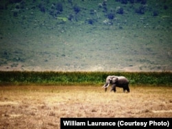 FILE - The African Savannah could suffer from wide-scale development.