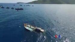 """印尼國慶日為60艘非法漁船舉行""""海葬"""""""