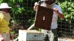 Susah Nggak Ya: Beternak Lebah Madu