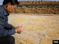 작황과 식량안보 조사를 위해 북한에 파견된 유엔 식량농업기구 실사단 (자료사진)