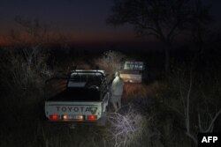 A ranger stands next to a vehicle during the annual census at the Balule Nature Reserve, in northern Limpopo, on Aug. 31, 2021.