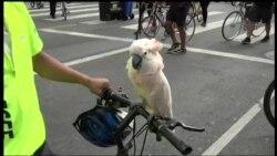 Дорогу велосипедистам!