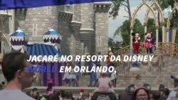 Outra tragédia em Orlando: criança é levada por jacaré na Disney