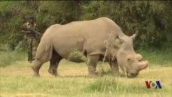2016年,动物保护的喜与忧