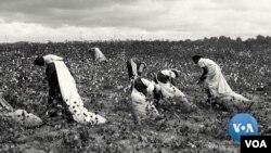 19-cu əsrdə Cənub ştatlarındakı qulların Şimala qaçırılaraq azad edilməsində Vilyam Pennin dindaşları Kveykerlər önəmli rol oynayırdı.